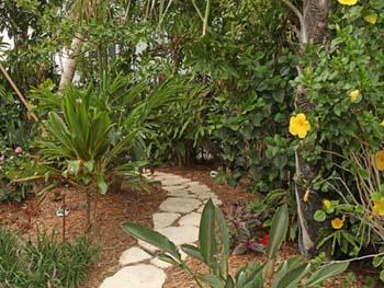 Bali Hai - Landscape